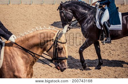Dressage horses and riders. Black and cream horses portrait during dressage competition. Advanced dressage test.