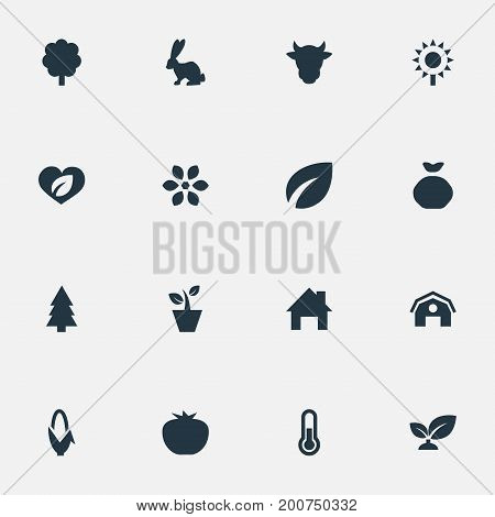 Elements Temperature Measurement, Livestock, Evergreen And Other Synonyms Hangar, Bunny And Wood.  Vector Illustration Set Of Simple Harvest Icons.