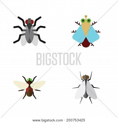 Flat Icon Buzz Set Of Gnat, Hum, Tiny And Other Vector Objects