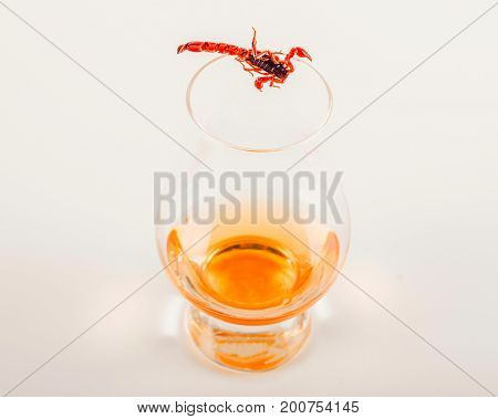 Single Malt Tasting Glass With Scorpion, Single Malt Whisky In A Glass, Black  Background