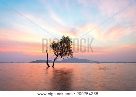 Alone alive tree is in the flood water of lake at sunset scenery in reservoirs overflowing