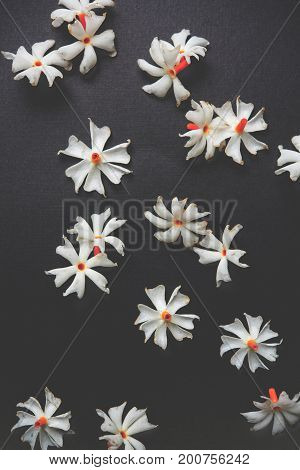 Nyctanthes arbor-tristis or Parijat or prajakt flower typically found in India,asia