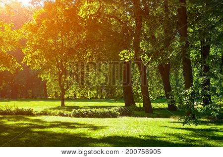 Summer landscape - colorful summer park with deciduous summer trees in sunny weather. Sunny day in summer park -green summer trees under soft summer sunlight. Bright summer landscape scene