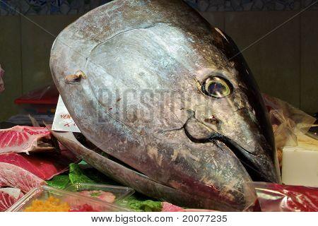 Tuna Head