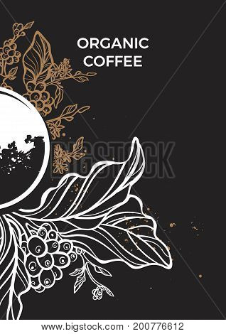 Branch of coffee tree with leaves flowers and coffee beans. Botanical drawing on black background. Floral decor for organic product. Vector illustration for template menu background
