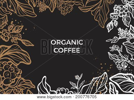 Branch of coffee tree with leaves flowers and coffee beans. Botanical drawing in circle. Floral decor for organic product. Vector illustration for template menu background