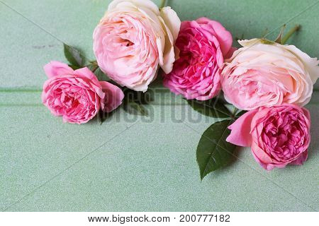 Frame from pink and white roses on green wooden background. Place for text. Selective focus.