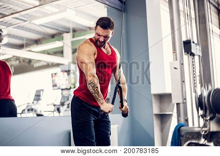 Muscular bearded man working out in gym doing exercises at triceps.