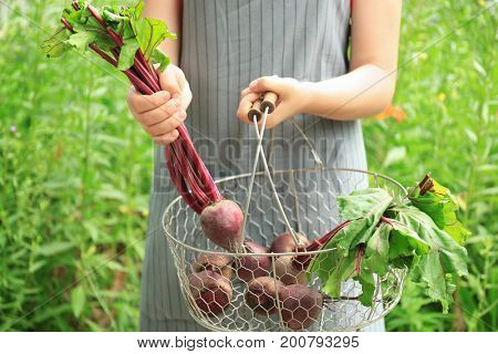 Woman holding metal basket with young beets outdoors