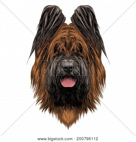 dog breed Briard sketch vector graphics with bowknot