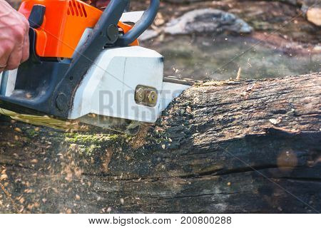 A man is sawing a chain saw dry trunk