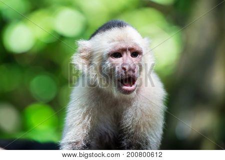 Monkey Resting In Rainforest Of Honduras