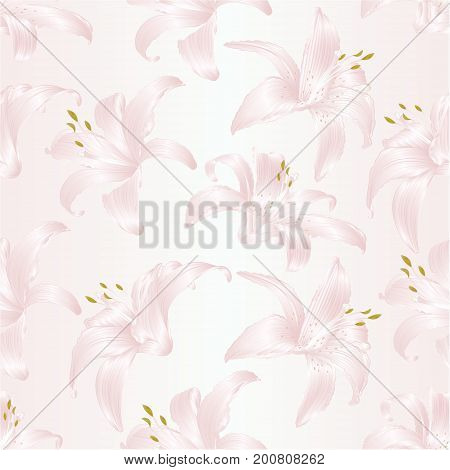 Seamless texture Lily white Lilium candidum a white flowers vector illustration editable Hand draw