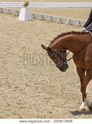 Dressage horse and rider. Chestnut brown horse portrait during dressage competition. Advanced dressage test. Copy space for your text.