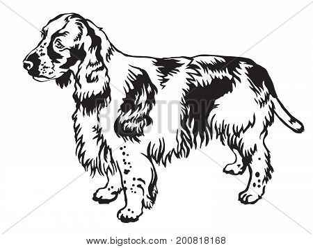 Decorative portrait of standing in profile English Springer Spaniel vector isolated illustration in black color on white background