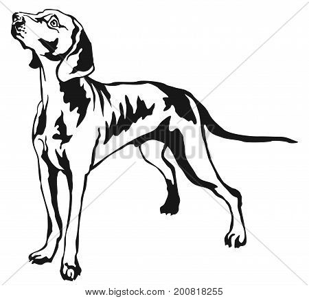 Decorative portrait of standing in profile Weimaraner vector isolated illustration in black color on white background