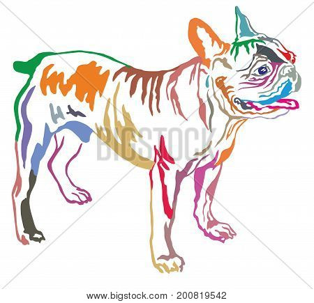 Colorful decorative portrait of standing in profile dog French Bulldog vector isolated illustration on white background