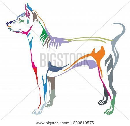 Colorful decorative portrait of standing in profile dog Thai Ridgeback vector isolated illustration on white background