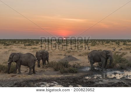 Three African elephants Loxodonta africana in the twilight at sunset at a waterhole in Northern Namibia