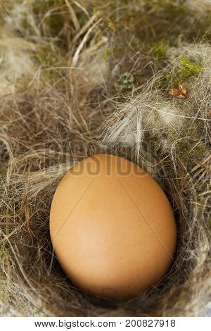 Big egg laid in a nest of straw