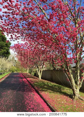 Row of spring blossoms by the road