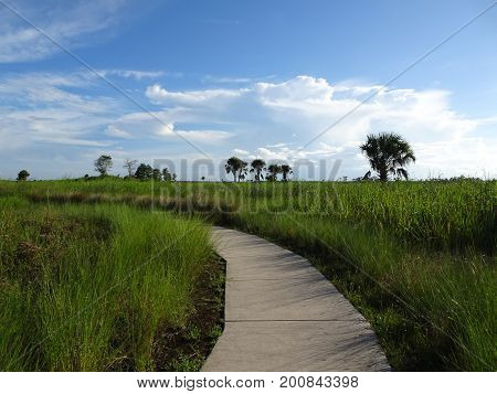 Hiking Trail In The Everglades