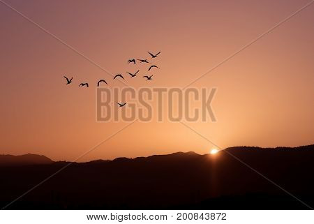 Seasonal autumn or spring migration of birds over bright sunset