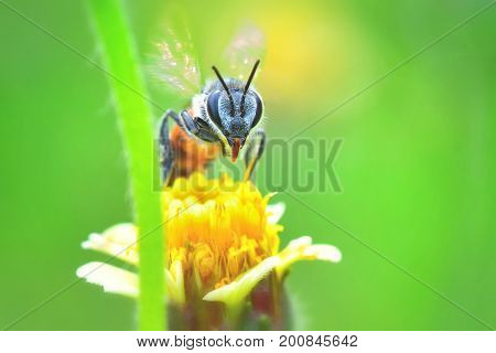 A Bee Flying To The Beautiful Flower