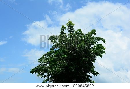 The Blue Sky With White Clouds And Green Tree On Sunshine Day