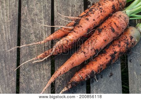 Fresh Carrot Bunch On  Rustic  Table