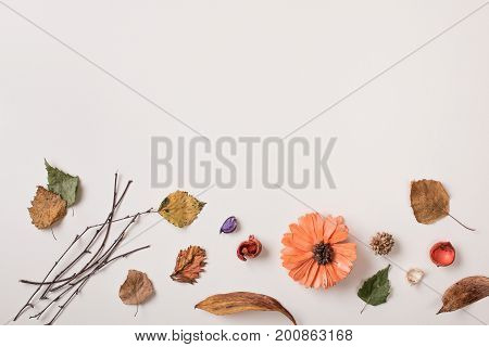 Autumn background: fallen leaves dry plants and petals orange dried flower on white with copy space for text from top. White background. Top view. Flat lay.