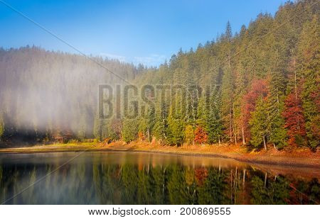 Forest In Autumn Morning Fog On The Lake