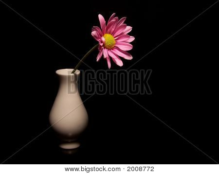 Pink Daisy In A Small Vase