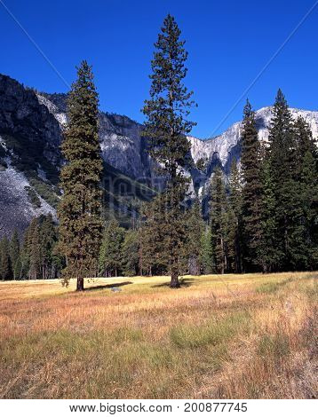 Trees in fields Yosemite valley Yosemite National Park California USA