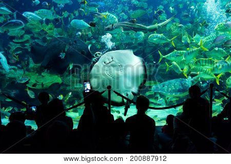 Kuala Lumpur Malaysia - April 18 2015: A general view spectators watch fish feeding in AQUARIA aquarium in Kuala Lumpur Malaysia