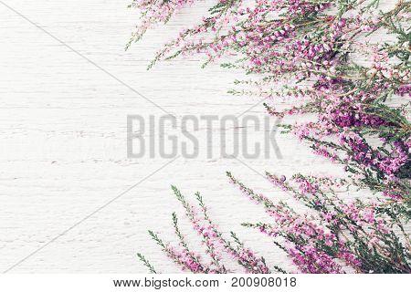 Beautiful pink flower heather frame (calluna vulgaris erica ling) on white rustic background top view.