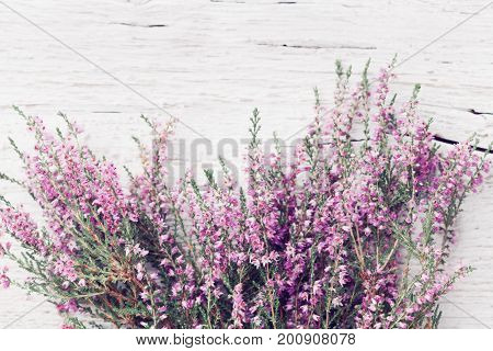 Bunch of heather flower (calluna vulgaris erica ling) on shabby wooden table top view. Pastel greeting card in vintage style.