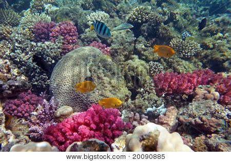 Red Sea Coral Life