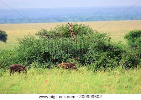 Queen Elizabeth National Park At Dawn Uganda
