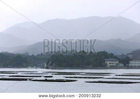 Oyster farms early foggy morning on the island of Honshu in Japan