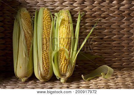 Fresh Sweet Corn On Cobs .