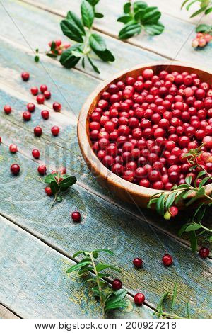 Cowberry (lingonberry partridgeberry foxberry) in wooden bowl on rustic vintage table.