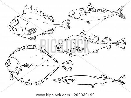 Set of sea fish on white background. Perch cod mackerel flounder saira. Vector doodle. Illustration isolated and grouped for easy editing.