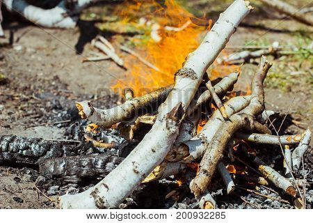 the bonfire of the branches burns on nature