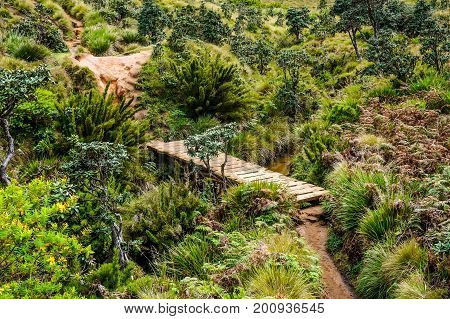 Srilanka Worlds End valley overview with wooden bridge.