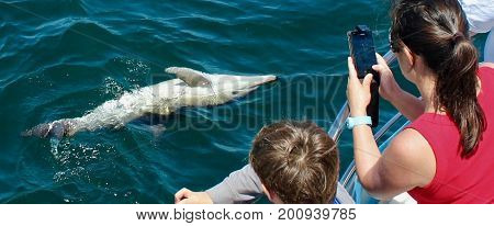 Striped common and bottlenose dolphins in the wild in the Strait of Gibraltar
