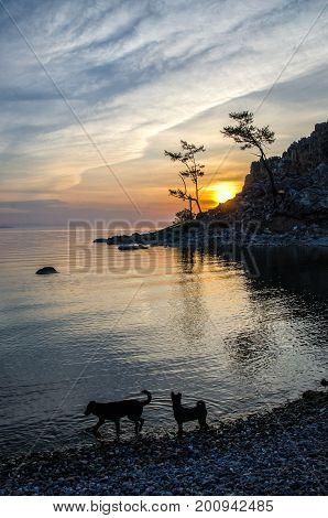 Summer sunset with two dogs near Mountain Rock of Shamanka Burhan on Olkhon Island in Lake Baikal Russia