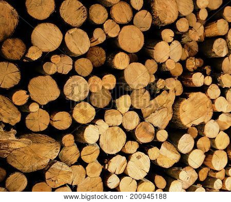 Woodpile Firewood Photo