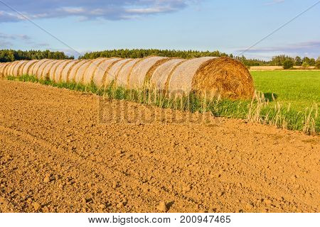 Straw Bales On A Green Meadow At Sunset