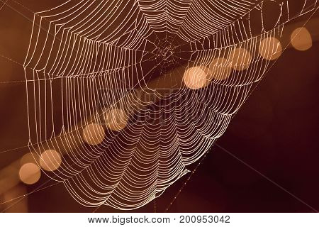 Spider's Web With Light Spots In Background